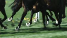 Pferderennbahn 17