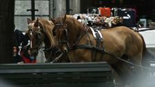 Pferdekutsche in Innenstadt 02