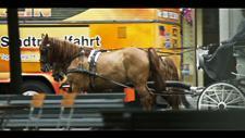 Pferdekutsche in Innenstadt 03