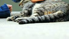 Katze Streicheln 01