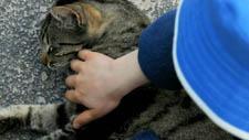 Katze Streicheln 02