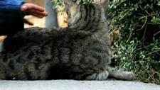 Katze Streicheln 03