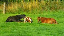 Pferde ruhen im Gras 01