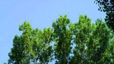 Laubbäume im Park 07