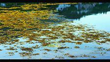 Seetang Gewächs auf Fluss in Schottland 6K RED 01