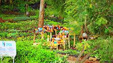 Bunte Tonvasen in Garten 01