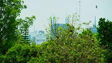 Büsche vor Skyline vo Nairobi (Kenia) 01