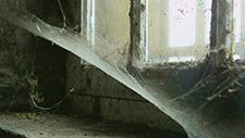 Spinnweben 01