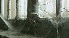 Spinnweben 02