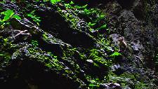 Batu Caves Affe an Felswand 01