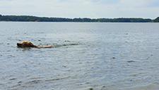 Hund schwimmt in See 03