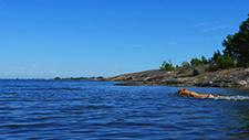 Hund schwimmt in See 04
