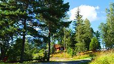 Waldweg vor Haus 01