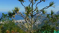 Palme in Rio de Janeiro 01